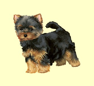 Acoger a un perro de raza yorkshire terrier