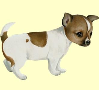 Acoger a un perro de raza chihuahua